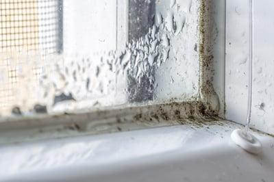 condensation and mildew on window