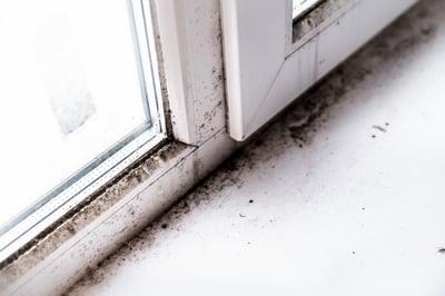 mildew on window perimeter